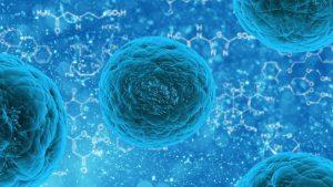 лечение стволовыми клетками в корее